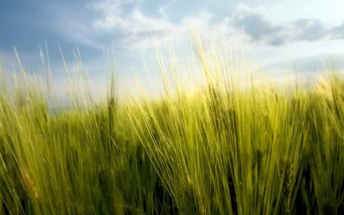 Green трава
