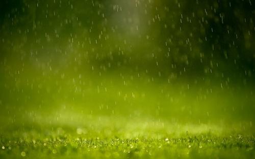 Green rumput