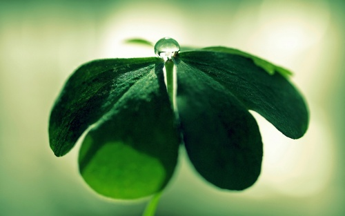 Green 草