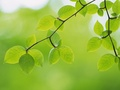 green - Green leaves wallpaper