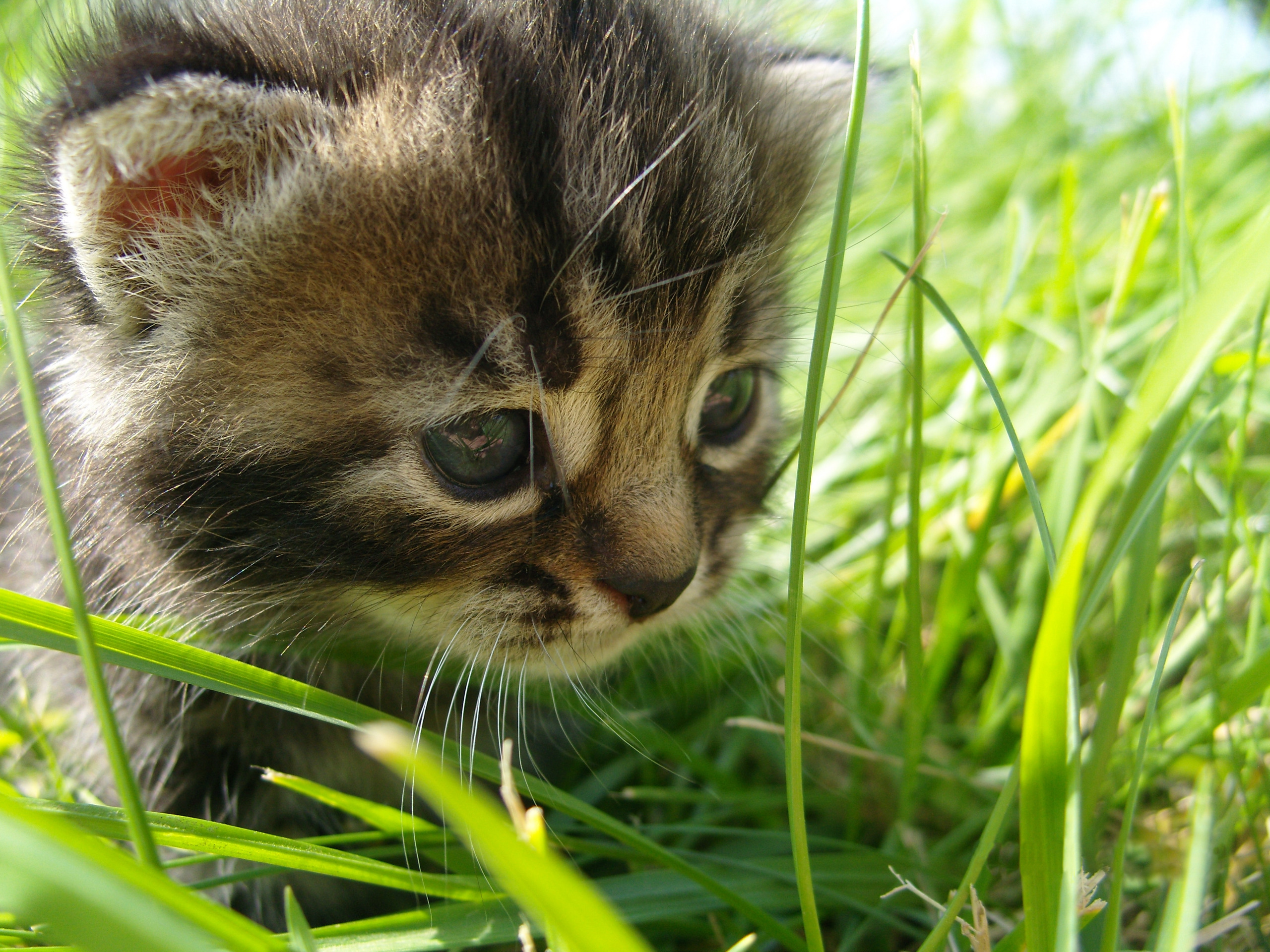 Cats images Kitty HD wallpaper and background photos ...