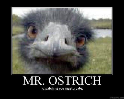 Mr. Ostrich...