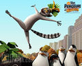P.O.M.G  - penguins-of-madagascar wallpaper