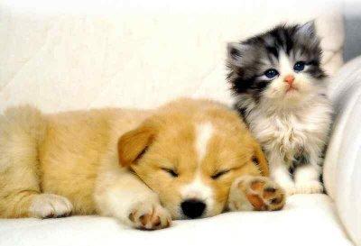 Cuccioli and gattini