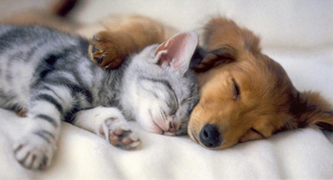 Puppy and kitten iPhone Wallpaper