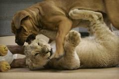 Cuccioli vs gattini