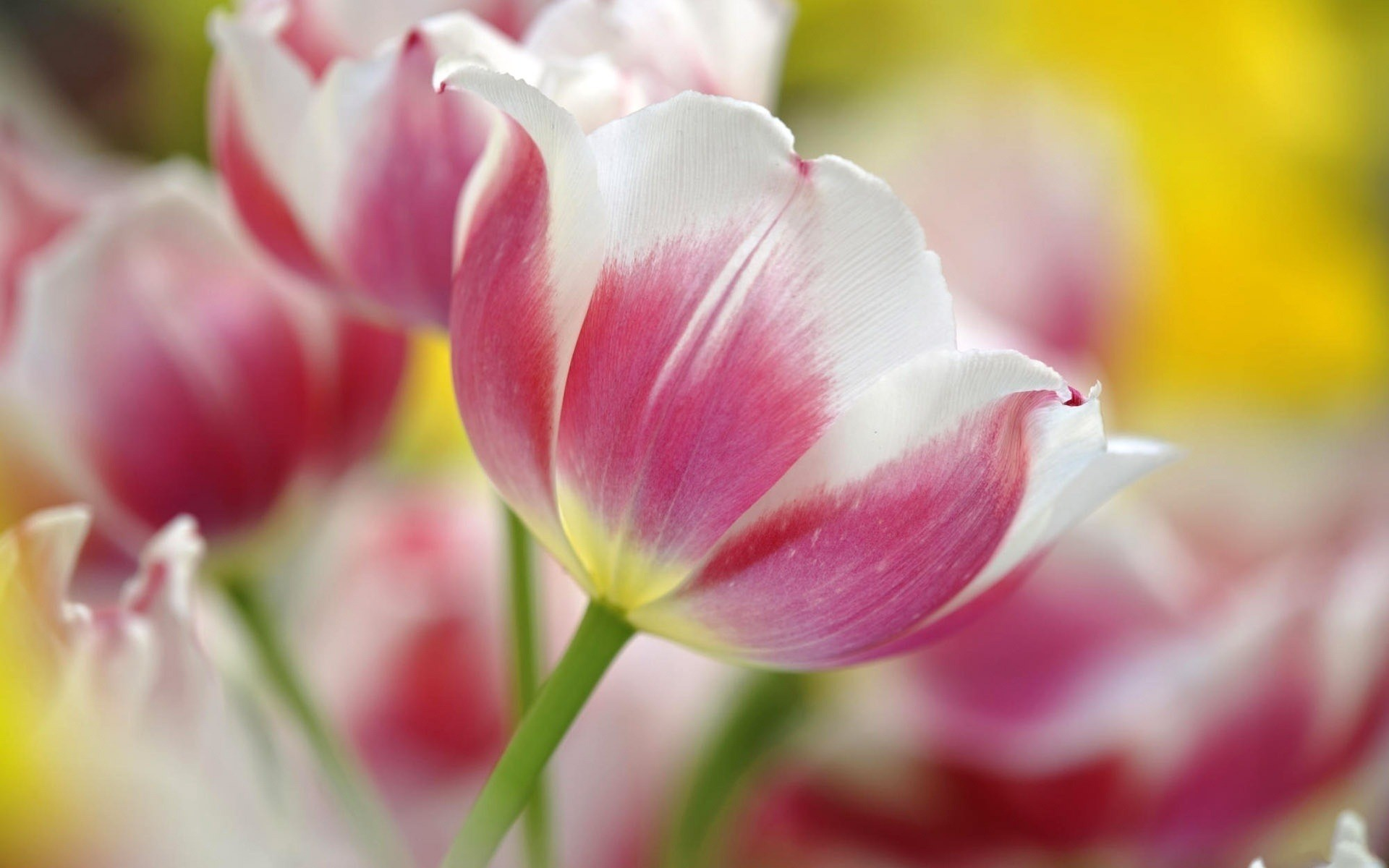 Fondo Abstracto De Flores Colores Para Whatsapp