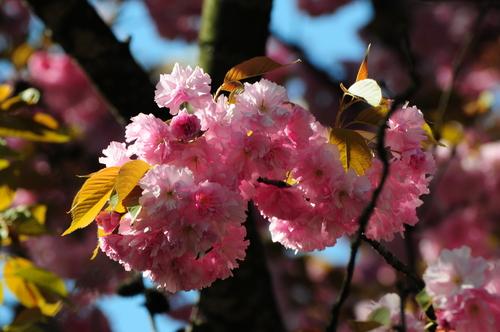 Spring 花
