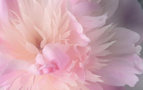 Spring flor
