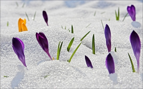Spring цветок