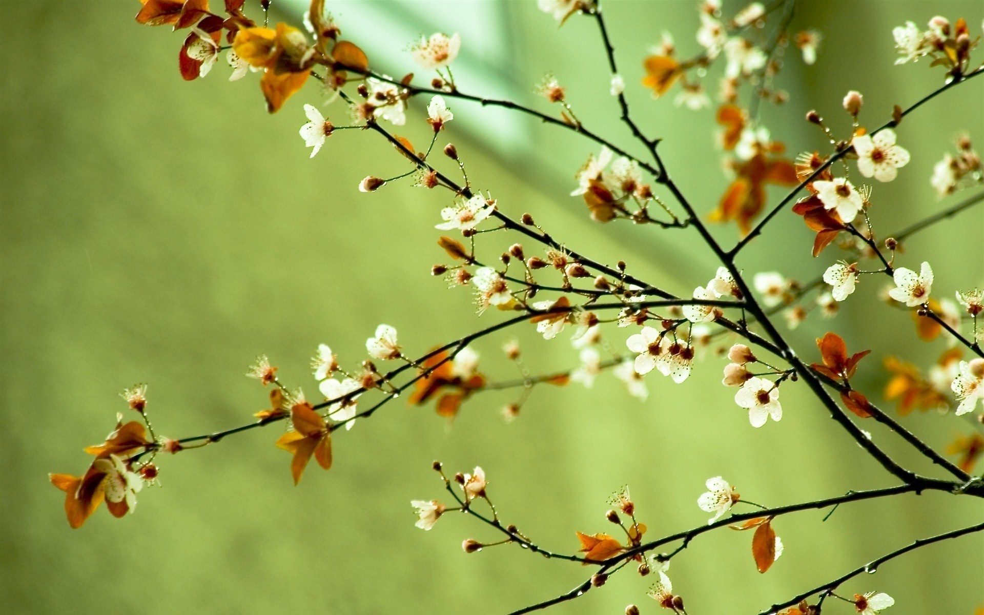 Spring Flower Background Images: Spring Images Spring Flowers HD Wallpaper And Background