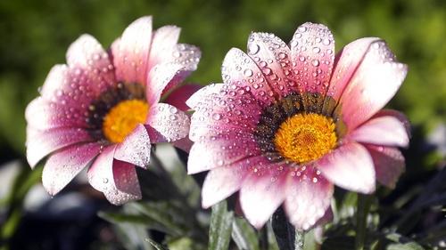 Spring Цветы