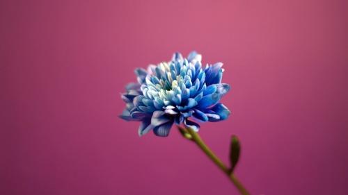 Spring 꽃
