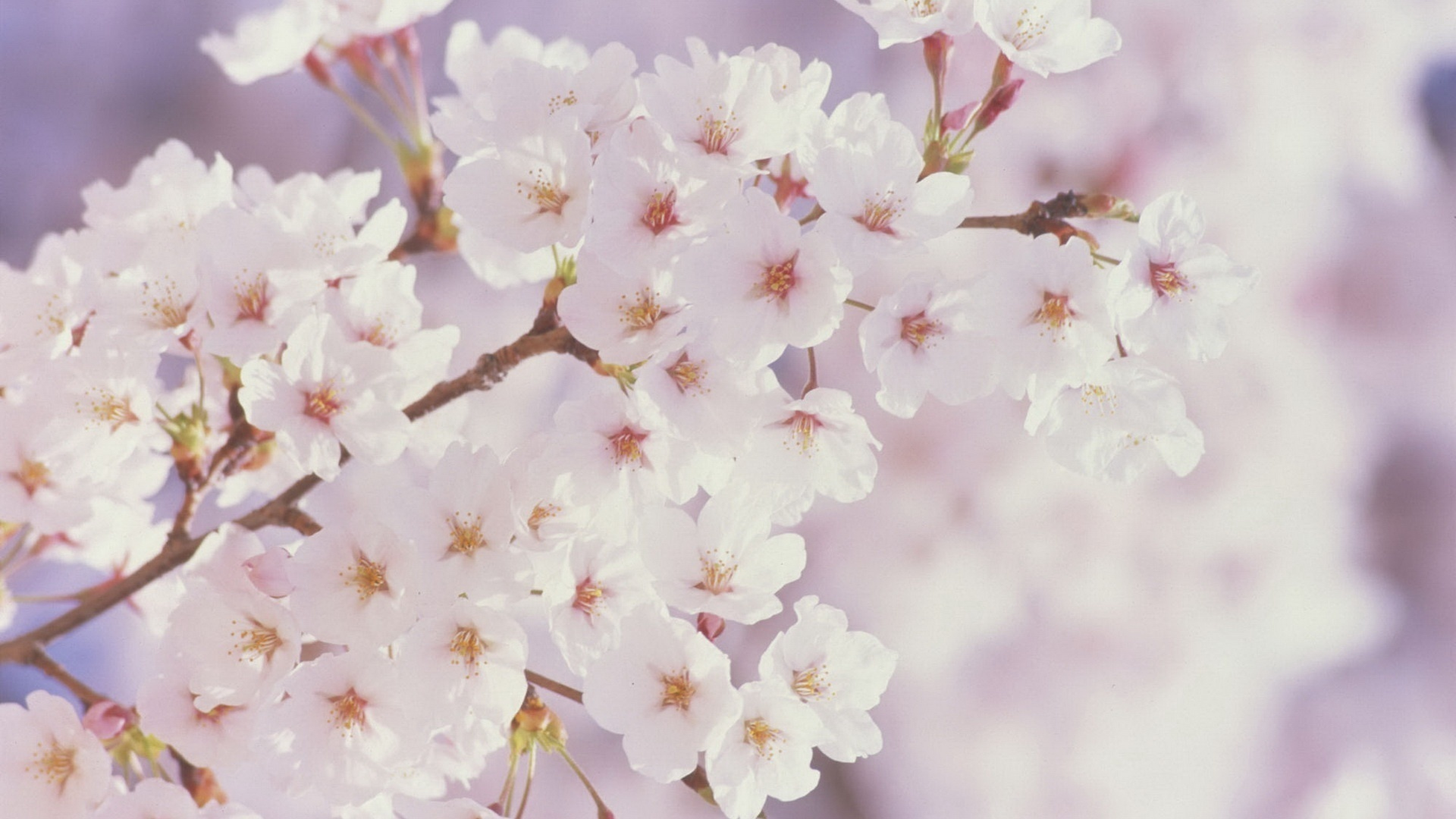 Spring Images Spring Flowers Hd Wallpaper And Background Photos