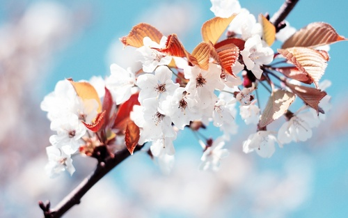 Spring bunga