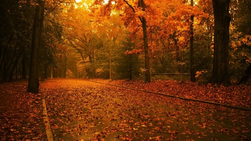 Trees in autumn - autumn Wallpaper