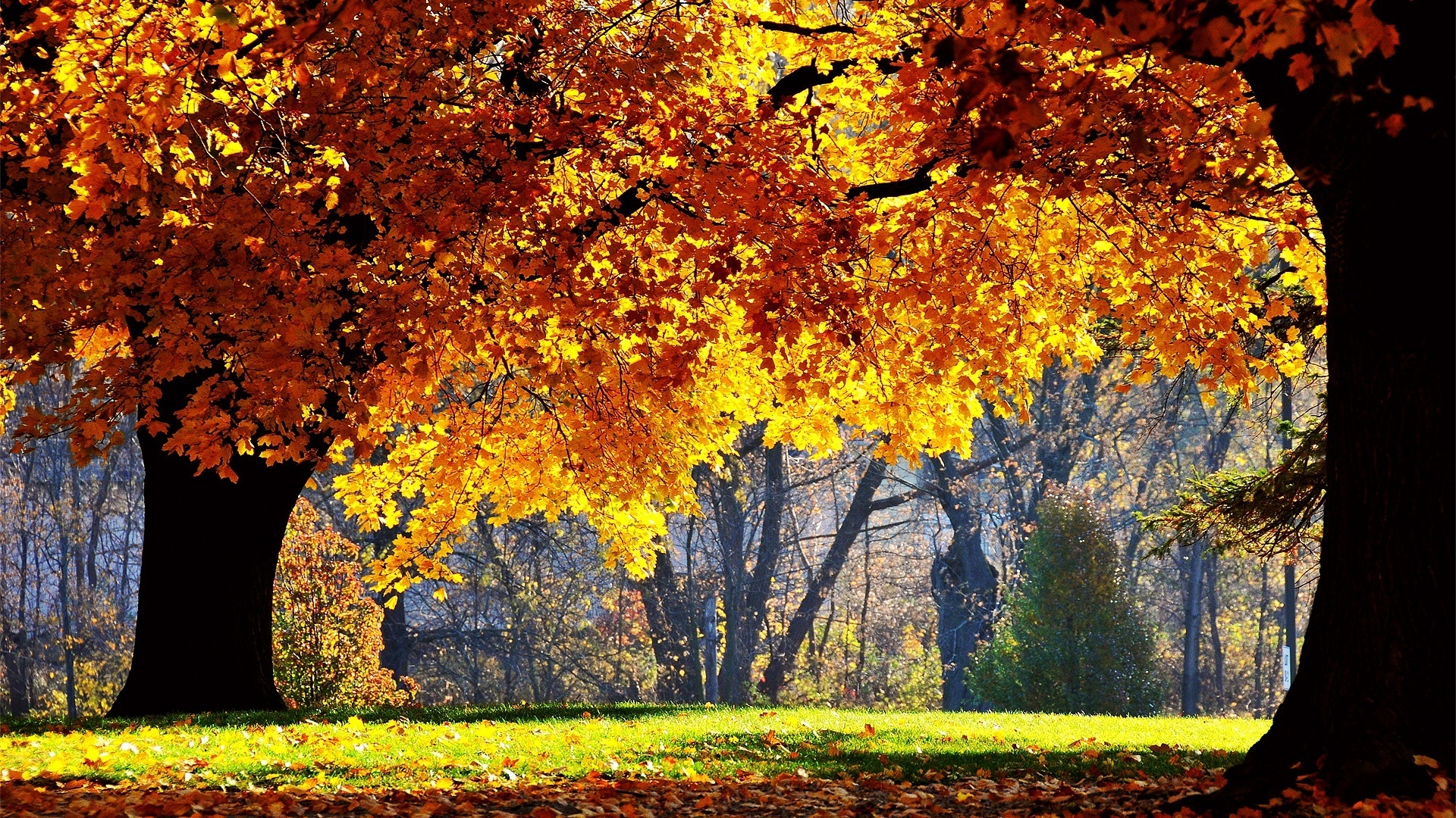 Scenery Pics Images Trees In Autumn HD Wallpaper And Background Photos