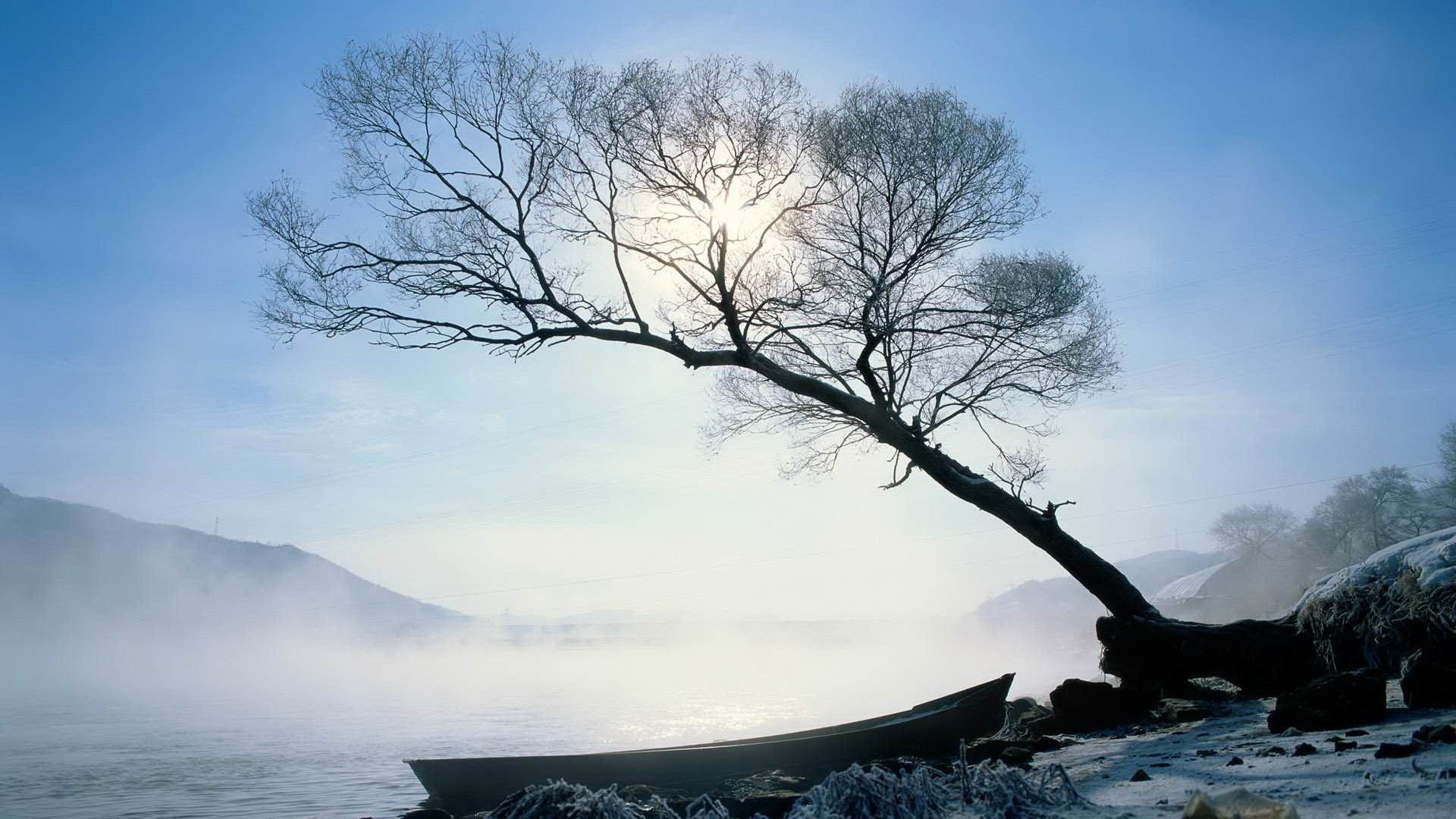 scenery pics images winter trees hd wallpaper and