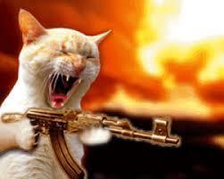 crazy cat