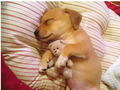 cute puppy with teddy bear