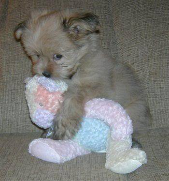 cute puppy with teddy bear - teddybear64 Photo