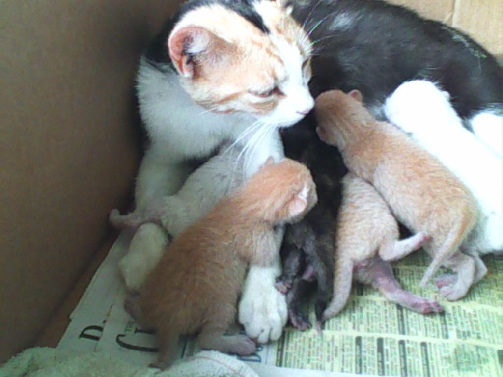 fluffy and her Kätzchen