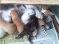 fluffy and her kittens - kittens photo