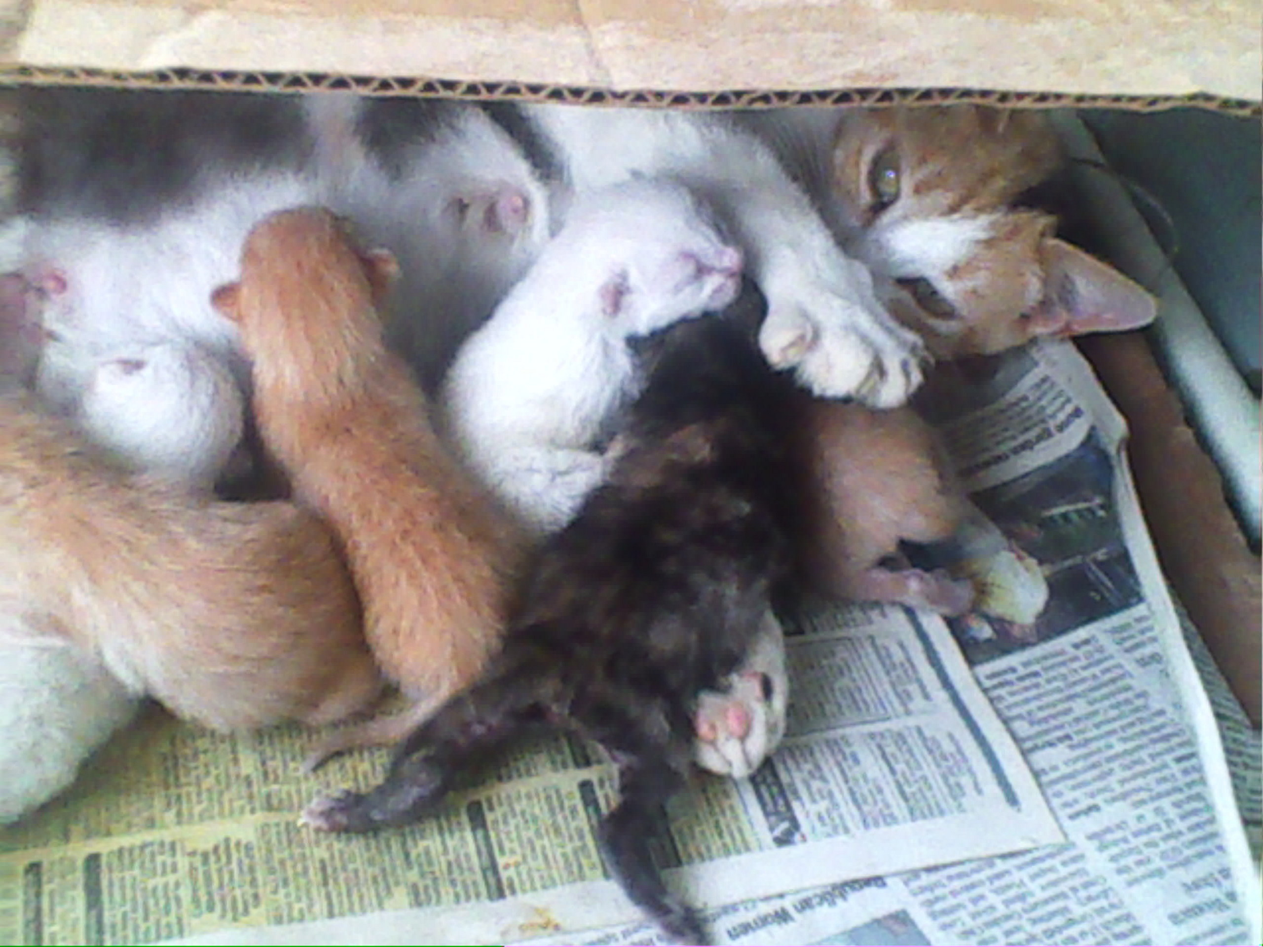fluffy and her kittens