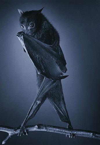गॉथिक bat