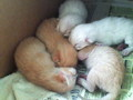 newborn kittens - kittens photo