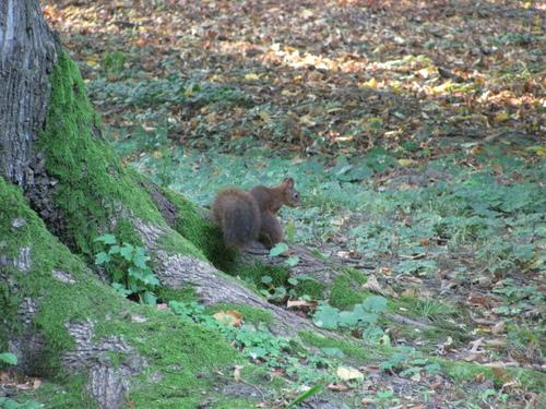 A écureuil
