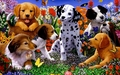 puppies - Adorable Puppies wallpaper