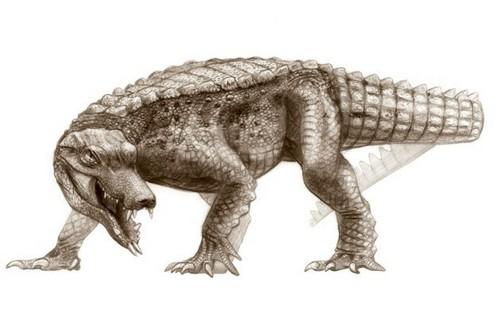 Araripesuchus rattoides