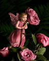 Baby rose fairy just for you!