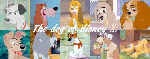 Disney Cani
