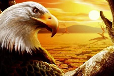 ファンタジー Eagle