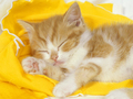Kitten  - uniquezandys-articles wallpaper