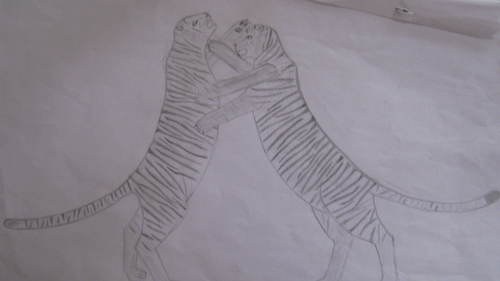 My drawings:Tigerfight