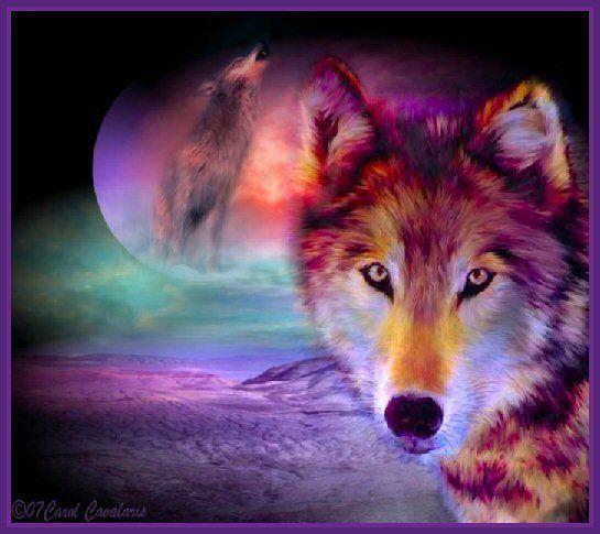 rainbow wolf wallpaper - photo #14
