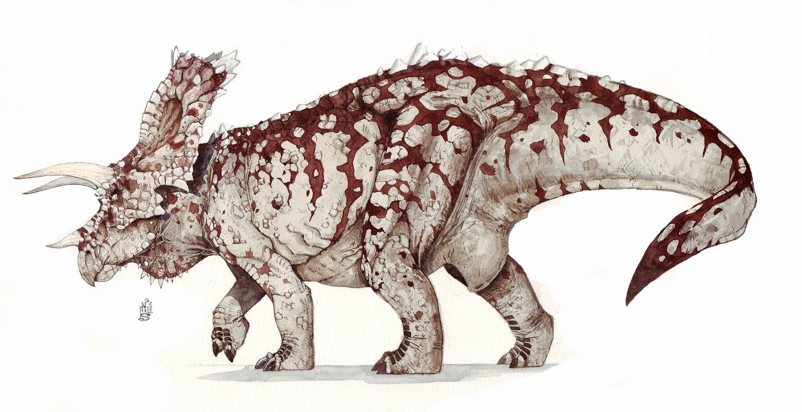 dinossauros images Triceratops HD wallpaper and background photos