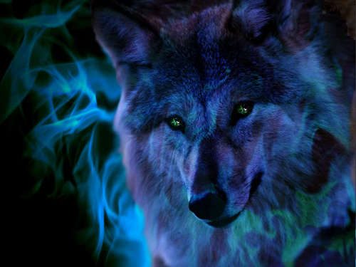 cool wolf pic