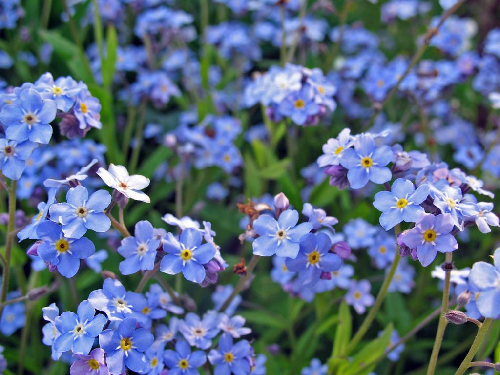 for me not Flowers Fanpop