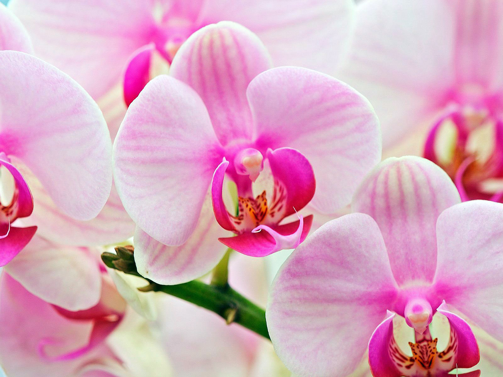 Image Gallery Most Beautiful Flowers List
