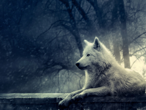 white loup background