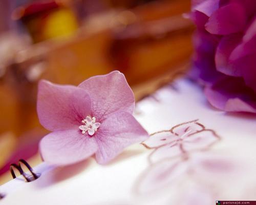 Gambar cantik kertas dinding with a bouquet, a camellia, and a begonia entitled ♥BP♥