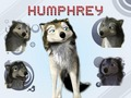 Humphrey Wallpaper - humphry-from-the-movie-alpha-and-omega wallpaper