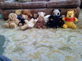 Most of my Bears - stuffed-animals photo