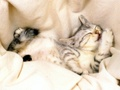 sleeping cat - kittens photo