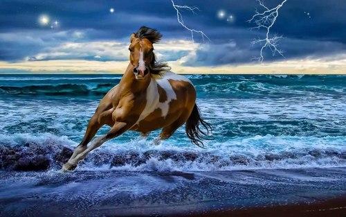 Horses wallpaper called Beautiful Horse
