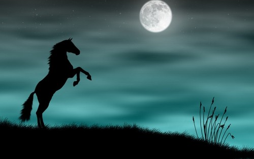 Horses wallpaper entitled Beautiful Horse